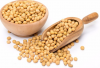High Quality Soybeans ...