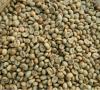 Coffee Bean - Green Coffee - Arabica Coffee Beans
