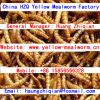 mealworm dried yellow ...
