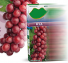 Grape Juice fruit