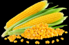 Yellow Corn / Maize / ...