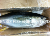 FRESH YELLOWFIN TUNA - GG
