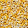 YELLOW CORN GRADE 2