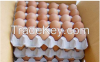 Fresh Chicken Eggs and...