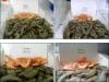 frozen vanamei shrimp