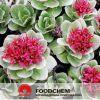 Free Samples Natural Rhodiola Rosea Powder Extract