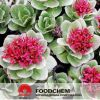 Free Samples Rhodiola Rosea Extract