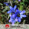 Free Samples Gentian Root Powder Extract