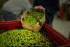 100% Organic Olive Oil