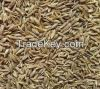 High Quality Cumin Seeds Available