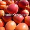 Fresh Quality Apricots