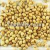 Corriander Seed|Fennel Seed|CHILLI|ANNATTO SEEDS,ONION,seeds