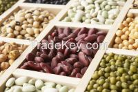 Dried kidney beans, red kideny beans with low price