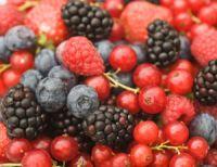 Berry Fruit Powder - BettaBerries� Antioxidant Blend