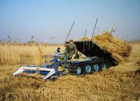 REEDA reed harvester