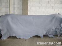 Calf Skins | Animal Hides | Raw Calf Leather