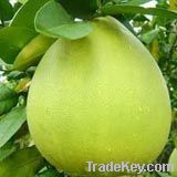 Pomelo Fresh Fruit