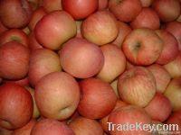 Fuji Red Apples