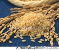RICE SUPPLIER| PARBOILED RICE IMPORTERS | BASMATI RICE EXPORTER| KERNAL RICE WHOLESALER| WHITE RICE MANUFACTURER| LONG GRAIN TRADER| BROKEN RICE BUYER | IMPORT BASMATI RICE| BUY KERNAL RICE| WHOLESALE WHITE RICE| LOW PRICE LONG GRAIN