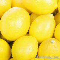 Fresh Yellow and Green Lemons