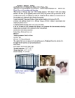 Electric Floor scale for weighing cattle/sheep/pigs