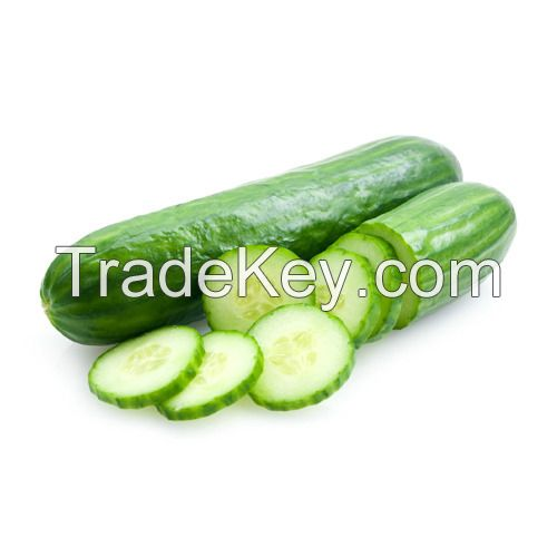 Fresh and healthy cucumber