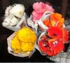 Цветок Gerbera | Свежие цветки отрезка