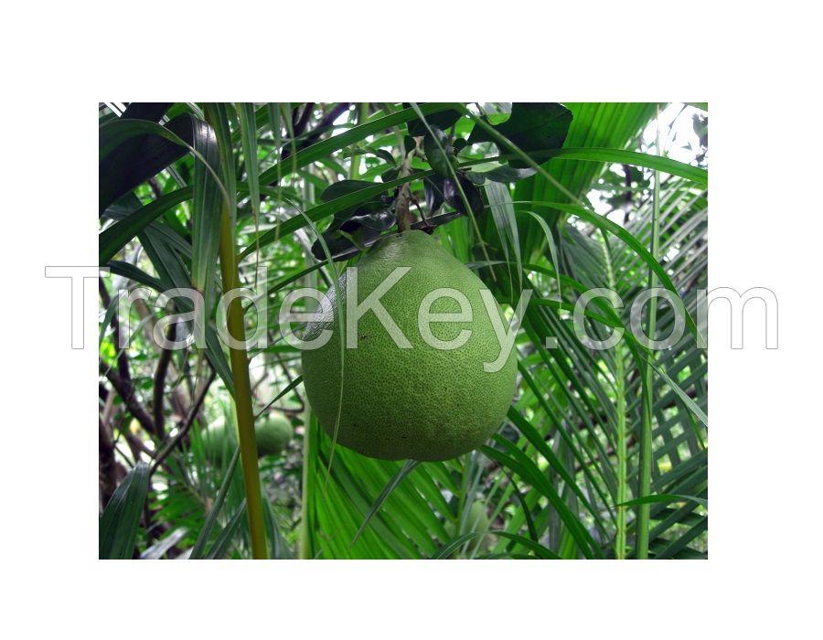 Buy fresh fruit grapefruit pomelo