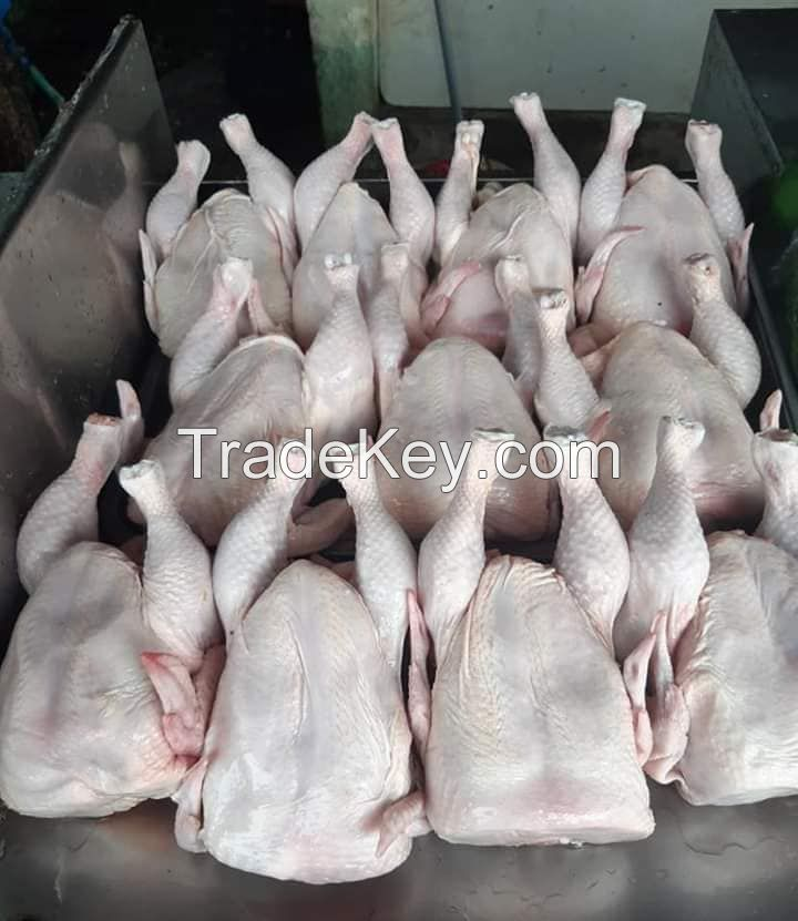 WHOLE CHICKEN FOR SALE