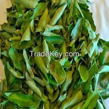 Clean Grade 1 Dried Curry Leaves for sale