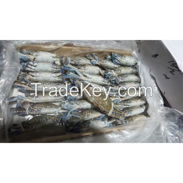 Frozen Blue Swimming Crabs Stock