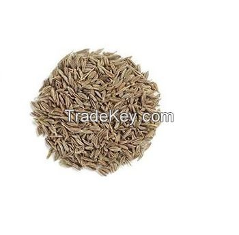 Dried Cumin Seeds For Sale