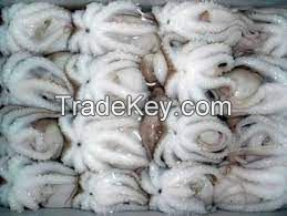 Frozen Octopus for sale