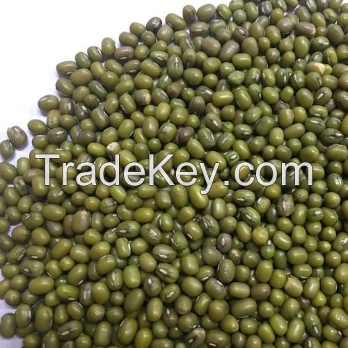 Premium Quality Green Mung Bean here...