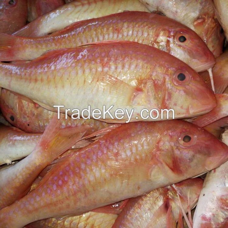 Frozen Sea Bream/ Red Sea Bream Fish