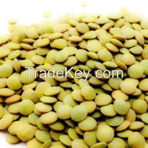 Supply lentils high quality green lentils 2021 new crop