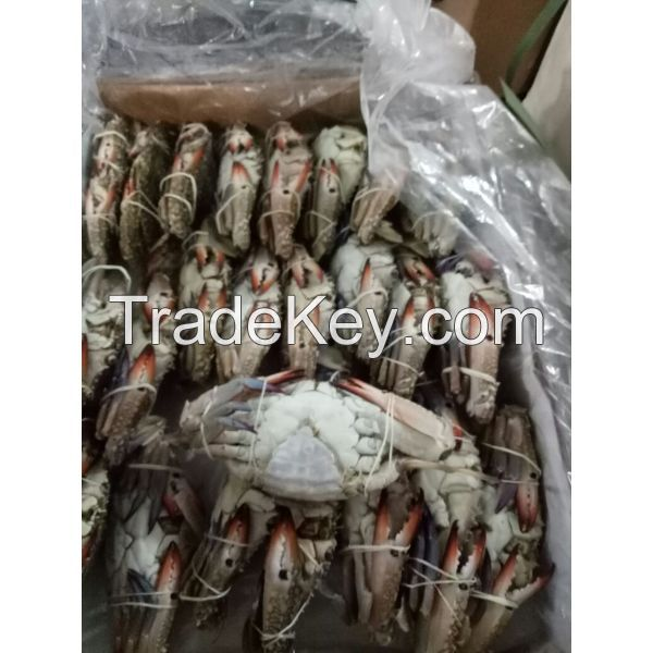 Blue Swimming Crabs In Affordable Price