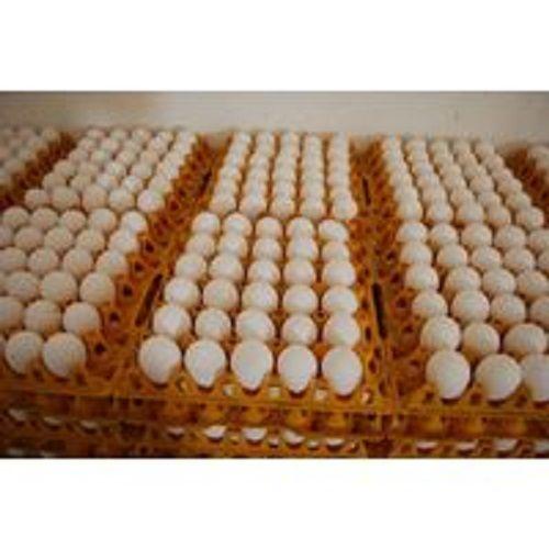 Best price chicken eggs
