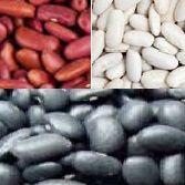 모두는 일본 백색 신장 콩을 치수를 잽니다