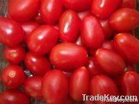 Свежие томаты фермы