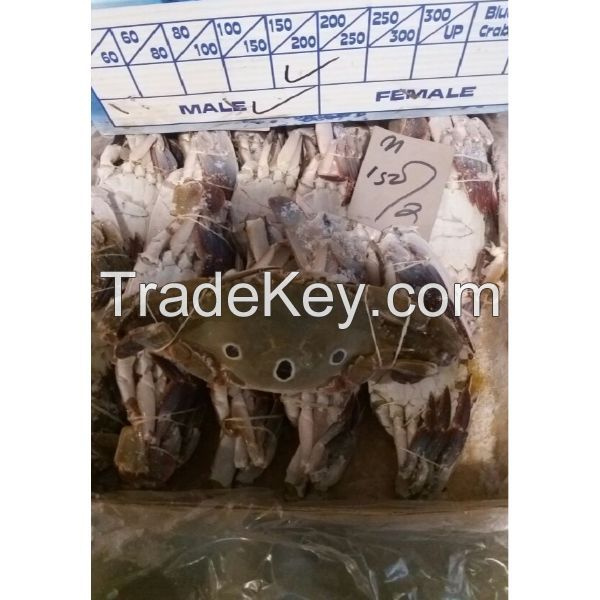 Fresh Frozen Blue Swimming Crabs