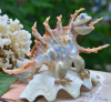 Seashell toys/ seashell animals