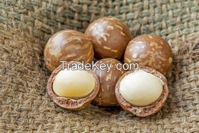 Organic Whole Raw Macadamia Nuts