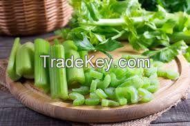 High Quality Fresh Celery