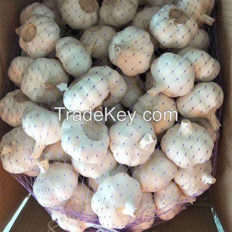 African Fresh Garlic