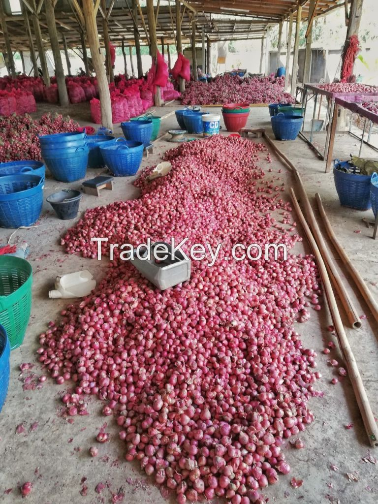 African Fresh Red Onion