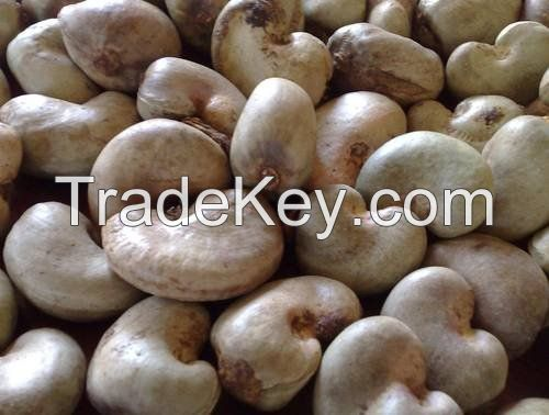 Raw Cashew Nut in Shell from Tanzania (East Africa).