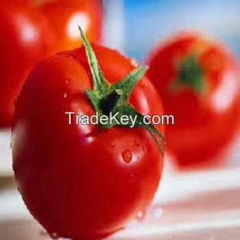 FRESH TOMATO EXPORT STANDARD PRICE FOR SALE HIGH QUALITY WITH BEST PRICE