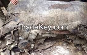 Wet Salted Donkey/Goat Skin /Donkey / Salted Cow Hides