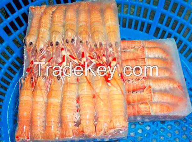 Frozen Whole Round IQF BQF Procambarus Clark II Crayfish / Crawfish